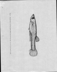 00_Unknown-Date_Fish-Hatchery-Test_Page_3
