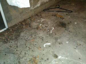 06-26-12 Avena basement_1